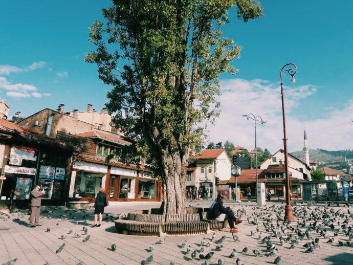 praça dos pombos