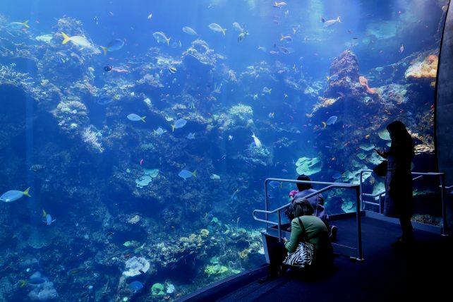 aquário no California Academy of Science