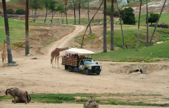 atividade extra no safari park