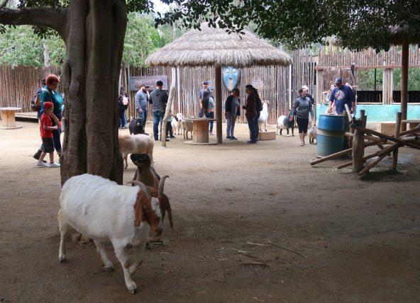 animais no safari park