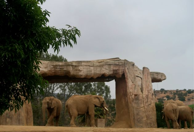 elefantes no safari park
