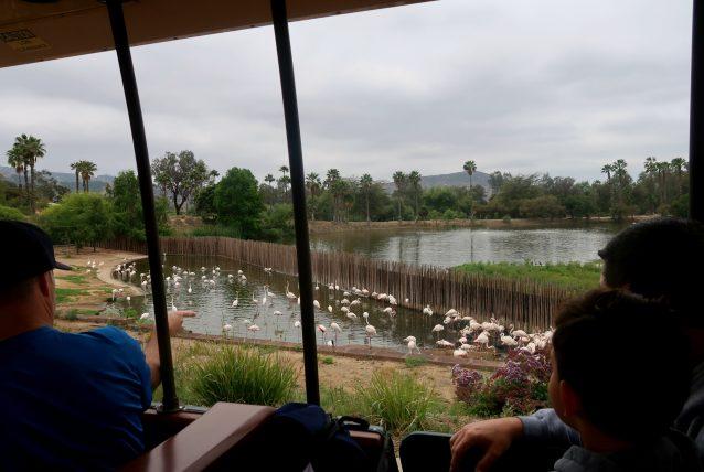 trenzinho no safari park