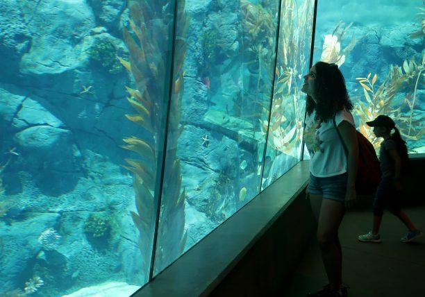 procurando pinguins no zoológico de san diego