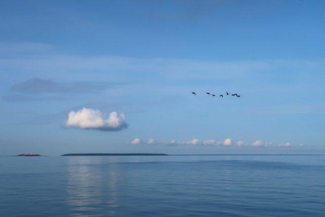 pássaros voando no caminho para a prangli island