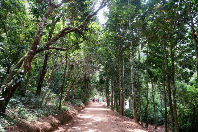 trilha em bonito, em pernambuco