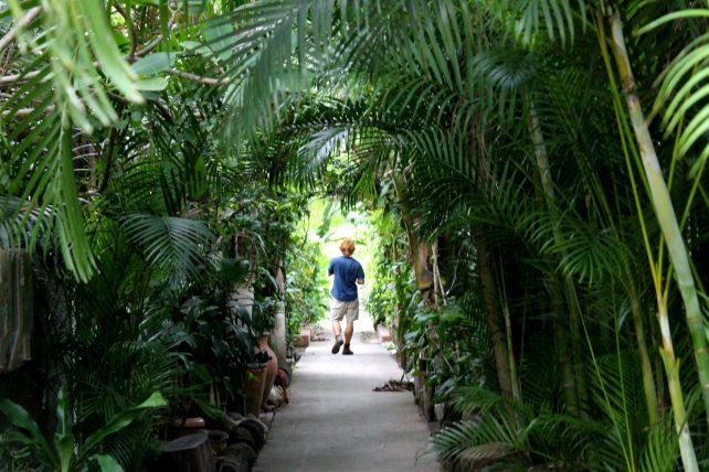 túnel de plantas na ilha da gigoia