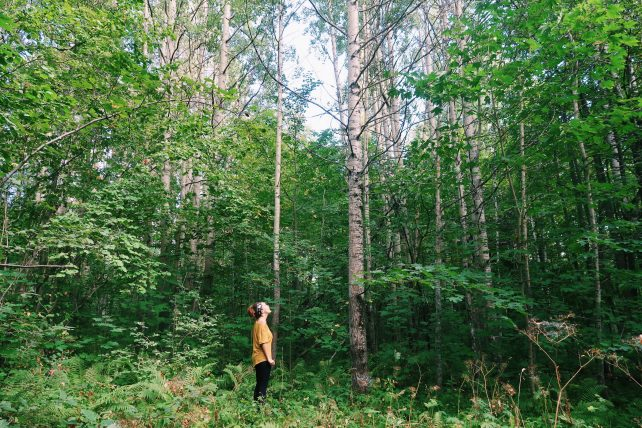 imersão na cultura finlandesa: admirando o bosque