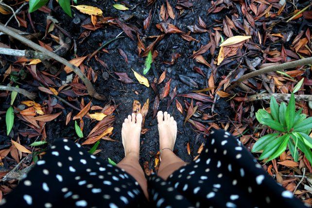 trilha no mangue na colômbia