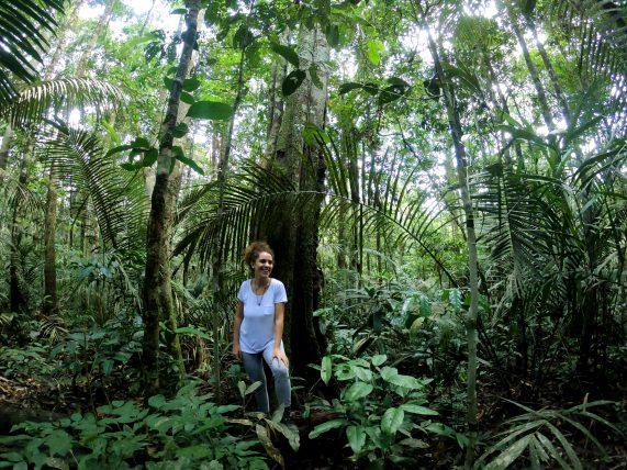 trilha pela floresta na amazônia