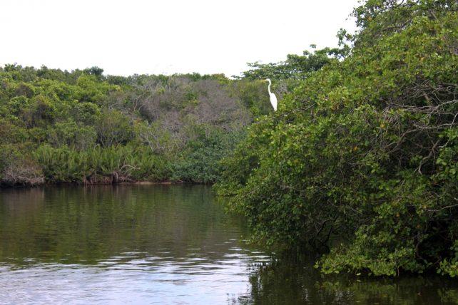 passeio na lagoa de marapendi