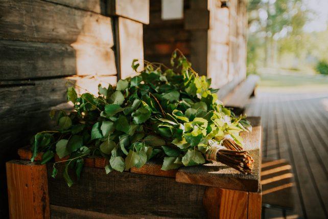 planta usada na sauna finlandesa. foto: Business Finland