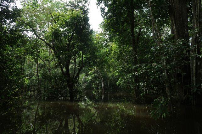 floresta inundada nas proximidades de manaus