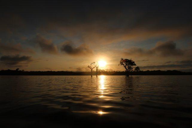 nascer do sol na amazônia