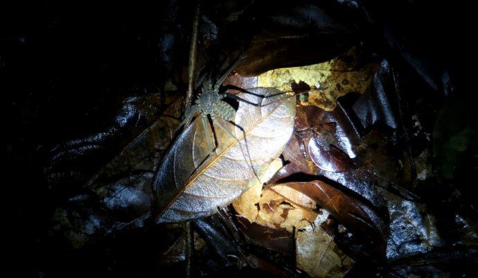caminhada noturna na amazônia
