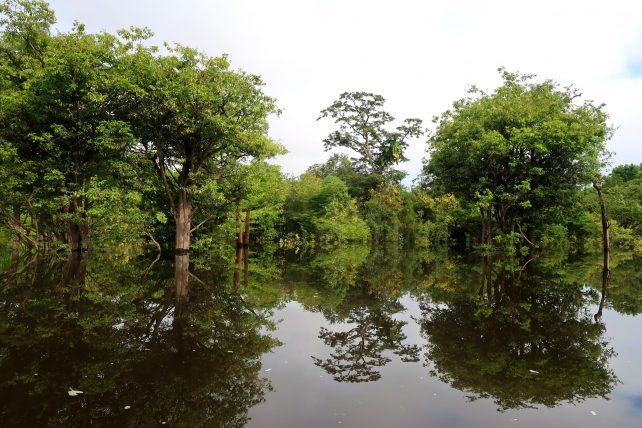 árvores refletidas no rio Juma