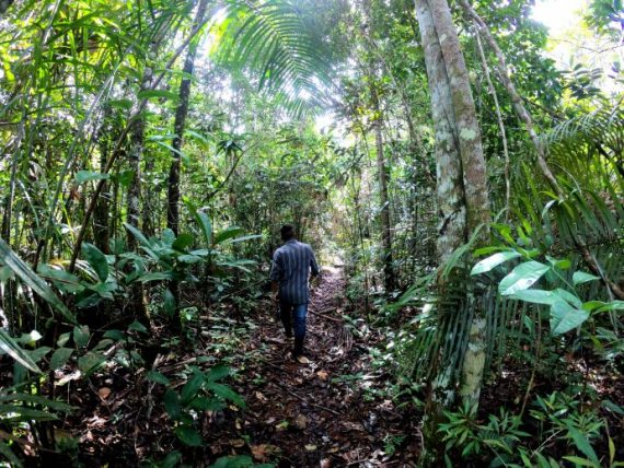 turismo em territórios indígenas na amazônia